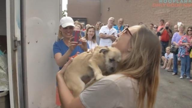 Couple adopts rescue dog before meeting him. When the door opens to reveal him, they lose it