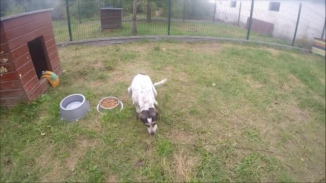 Dog locked up in a cramped cage for long years – watch her feel grass under her paws again