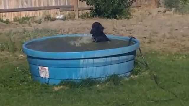 Happy puppy is having time of her life in the pool