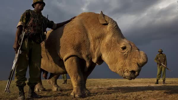 Kenyan Poachers Now Face the Death Penalty