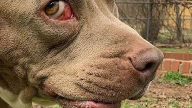 Stray dog with two mouths finds forever home against all odds