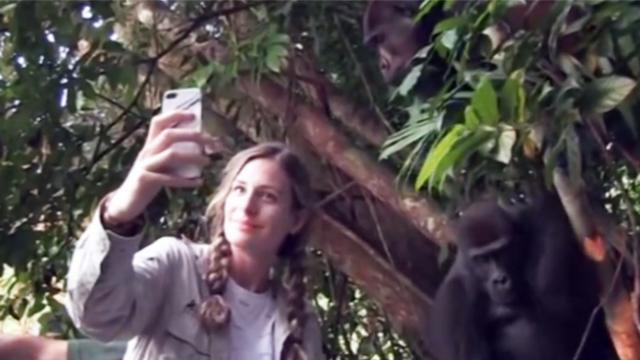 She grows up with gorillas. 12 years later when they're reunited? This left me speechless!