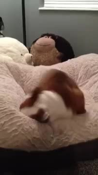 This puppy just got a new bed. His reaction? I could watch this all day