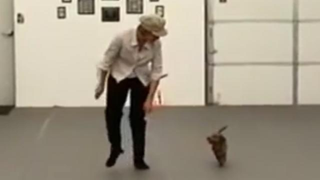 Woman proves anything is possible when she and her dachshund perform a choreographed dance together