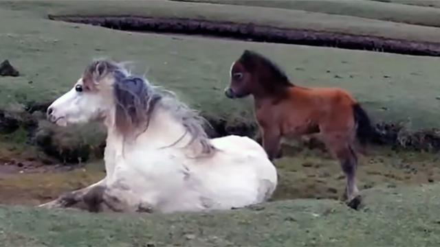 Baby horse refuses to leave mom's side Rescuers realize they