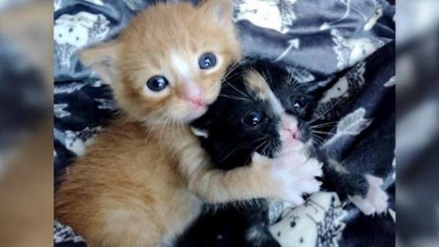 Kitten brother and sister keep each other alive until they are saved
