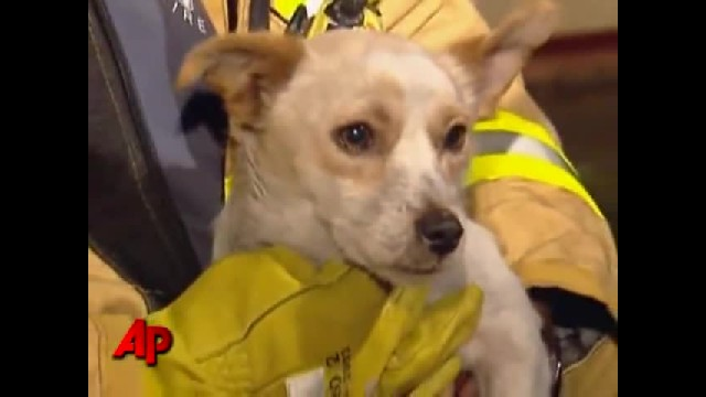 Firefighters Rushed Into Home To Find Dog Lying On Top Of 4 Kittens To Protect Them From Fire