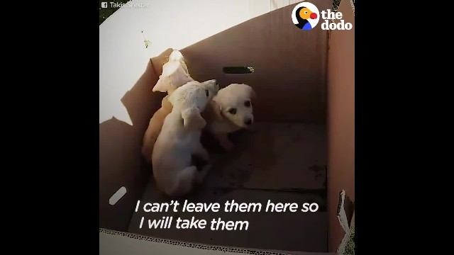 Mother dog & nine puppies sealed in a box - thrown into the trash
