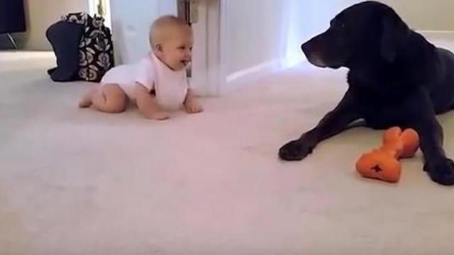 Daddy's filming baby girl's first crawl, but it's dog's actions at the end that go viral