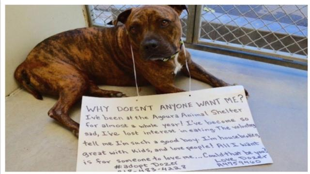 Heartbroken Shelter Dog Stops Eating Because No One Wants Him