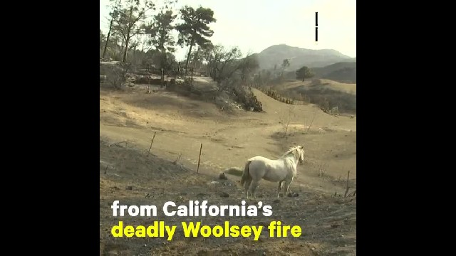 Hollywood Stuntman Risks Life Saving 300 Horses From California Wildfires