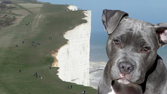Pit Bull saves young girl from falling off deadly 60-foot cliff