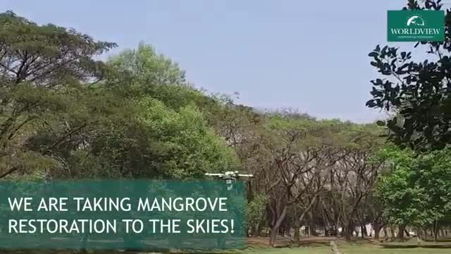These tree-planting drones are firing 'seed missiles' into the ground. Less than a year later, they'