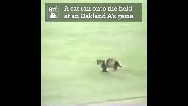 Cat disrupting the game ends up saving thousands of lives