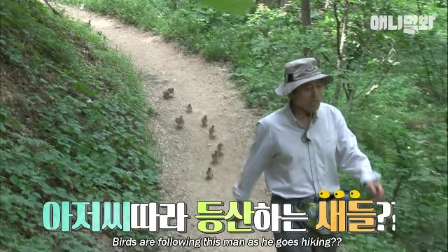 Baby birds follow a man in group on a hike LOL