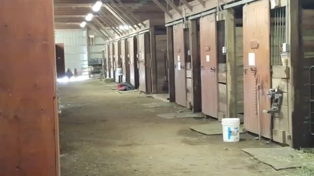 Tiny horse race breaks out in stables. Owners lose it when unexpected outsider sprints around the co