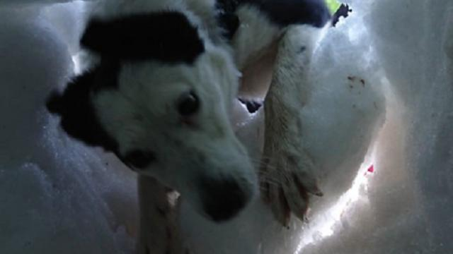Here's what it looks like when a rescue dog saves someone buried in snow
