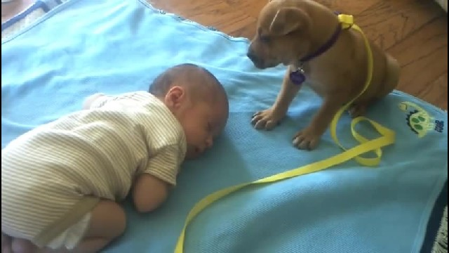 Puppy's trying to keep an eye on baby, but when this happens, everyone melted