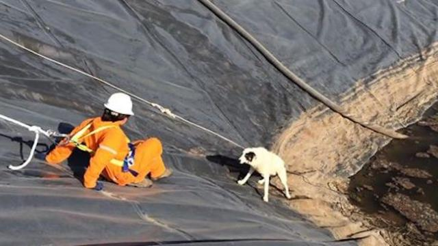 Workers rescue dog and her baby from water pit