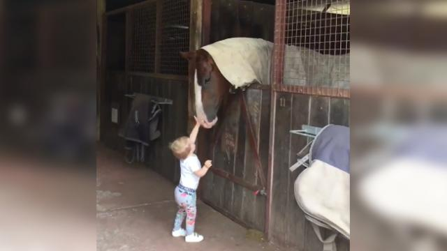 "Little girl toddles around horse barn ""Making The Rounds"" in adorable home video."