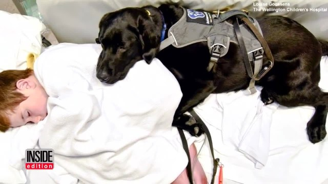Service Dog Cuddles 9-Year-Old Boy with Autism While Lying in Hospital