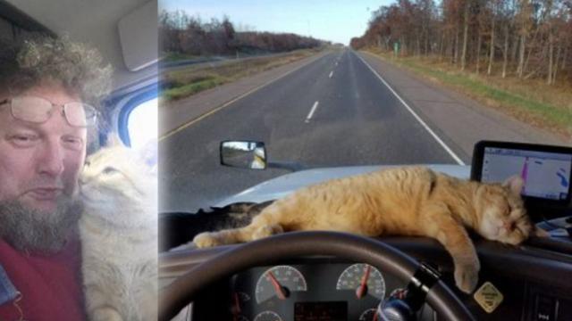 Lonely truck driver decides to adopt abandoned stray cat