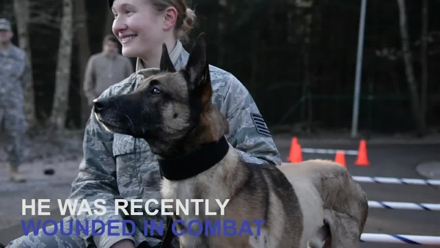 Army Dog waits Months to be with his Soldier Again. Then he Finally Sees his Face! Awesome!