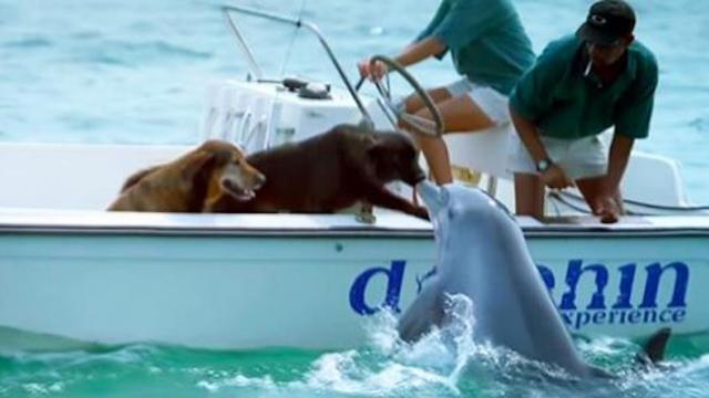 Watch adorable moment dolphin jumps out of water to kiss dog on the boat