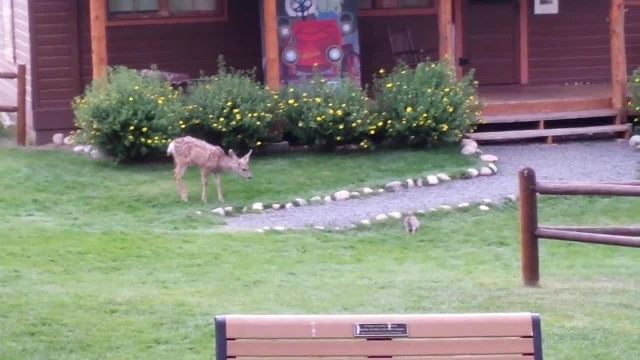 Real-life Bambi and Thumper caught on camera hanging out