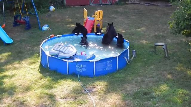 A group of black bears caught a New Jersey family by surprise for having a wild pool party in the ba