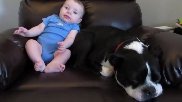 Baby let's off loud fart – dog's reaction has thousands of people cracking up in laughter