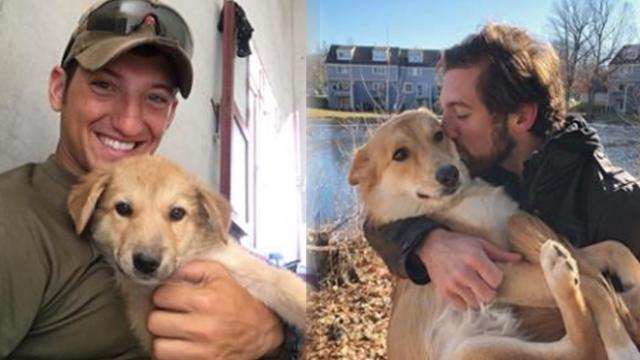 Soldier falls in love with puppy overseas. Watch moment they're finally reunited in US