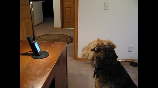 Dog Misses His Mom So He Calls Her On The Phone, She Can't Stop Laughing At What He Has To Say…