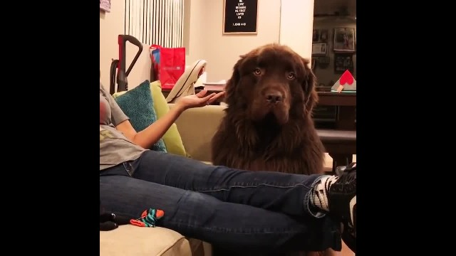 Is it too late to say sorry! Dog is super upset with owner