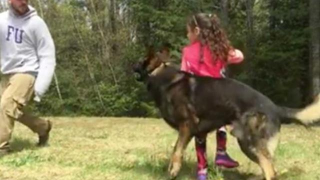 Friendly dog plays with little girl, then she gives him the signal and he springs on attacker