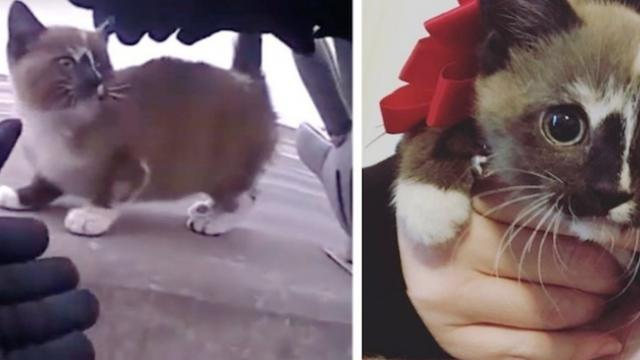 Kitten saved from highway by officer, jumped into his lap and insisted on going home with him