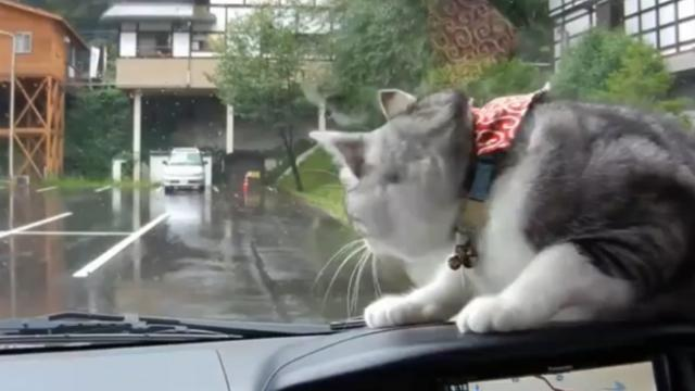 What this cat does when it sees the windshield wipers move will have you rolling with laughter