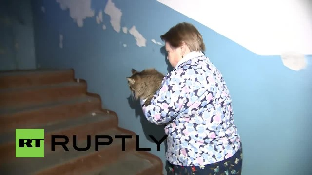 Baby is abandoned and left to freeze to death – but now watch what this cat does