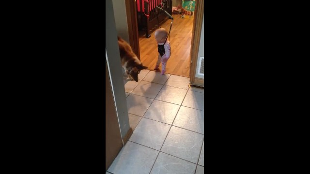 Dog notices baby girl's shadow on jumper when dog's actions have mom losing it
