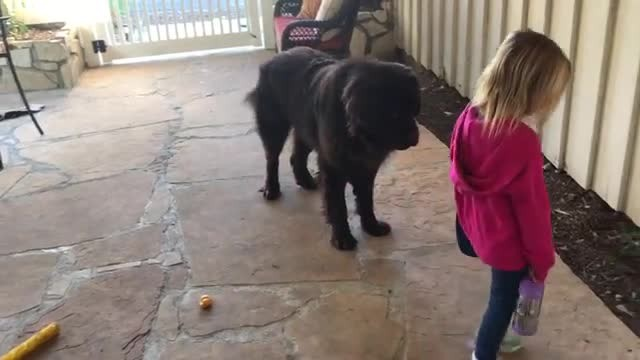 Dog shares sweetest routine with little girl before she goes off to school