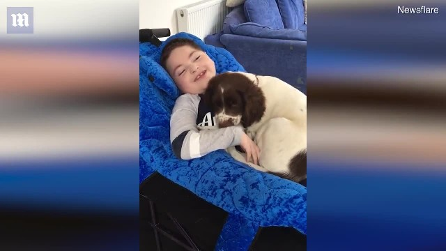 ADORABLE moment a boy with a rare condition bonds with puppy