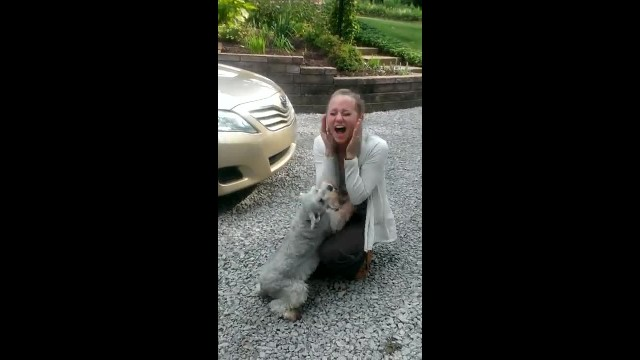 Lost Schnauzer Is Reunited With Her Owner – Is So Overcome With Excitement That She Faints