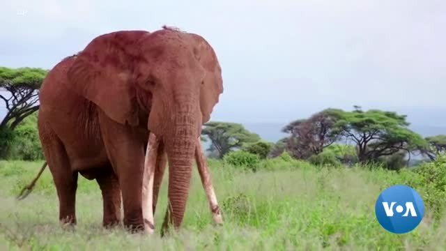 Conservationists Continue Fight Against Poachers, Climate Change