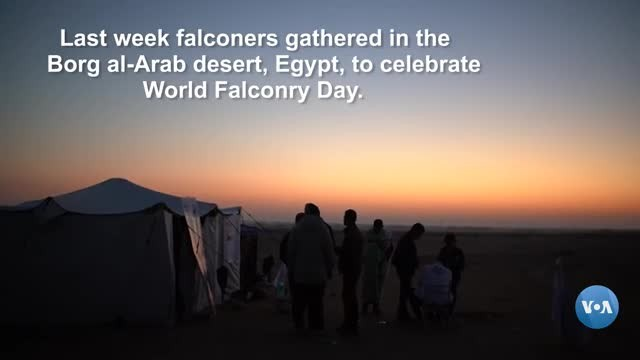 Egyptian Falconers Raise Awareness on World Falconry Day