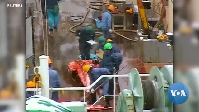 Japan to Leave International Whaling Commission; Resume Commercial Whaling