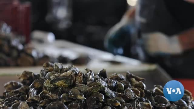 The Latest Drone Technology Helps Keep an Oyster Farm Thriving