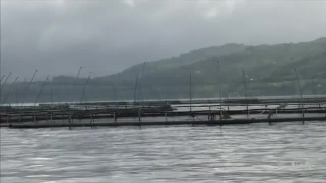 Aquaculture Producers Looking for New Ways to Feed Fish