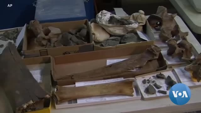 LA Subway Excavation Uncovers Cache of Fossils