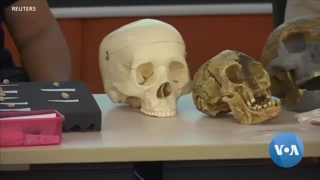 Researchers Discover New Human Species