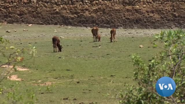 Zimbabwe's Dry Areas Appeal For Food Aid and Water Supplies